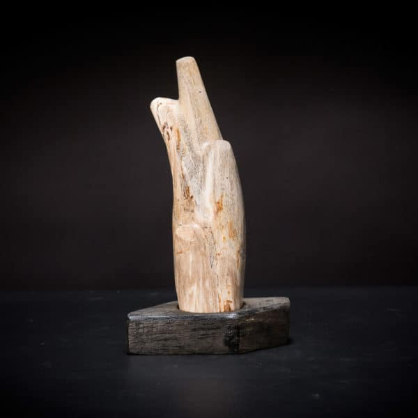 Petrified Wood Fossil-0