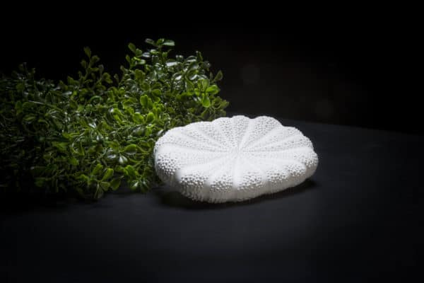 pigeon and poodle soap dish