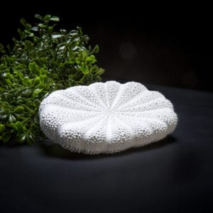 hilo pigeon and poodle soap dish