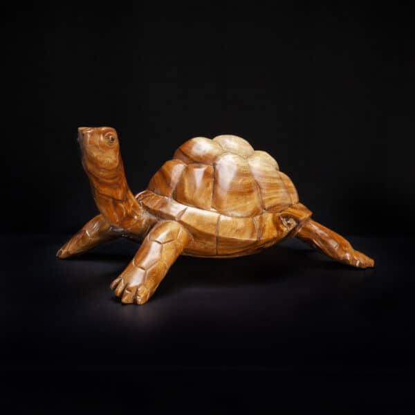 Teak Root Turtle Tortoise
