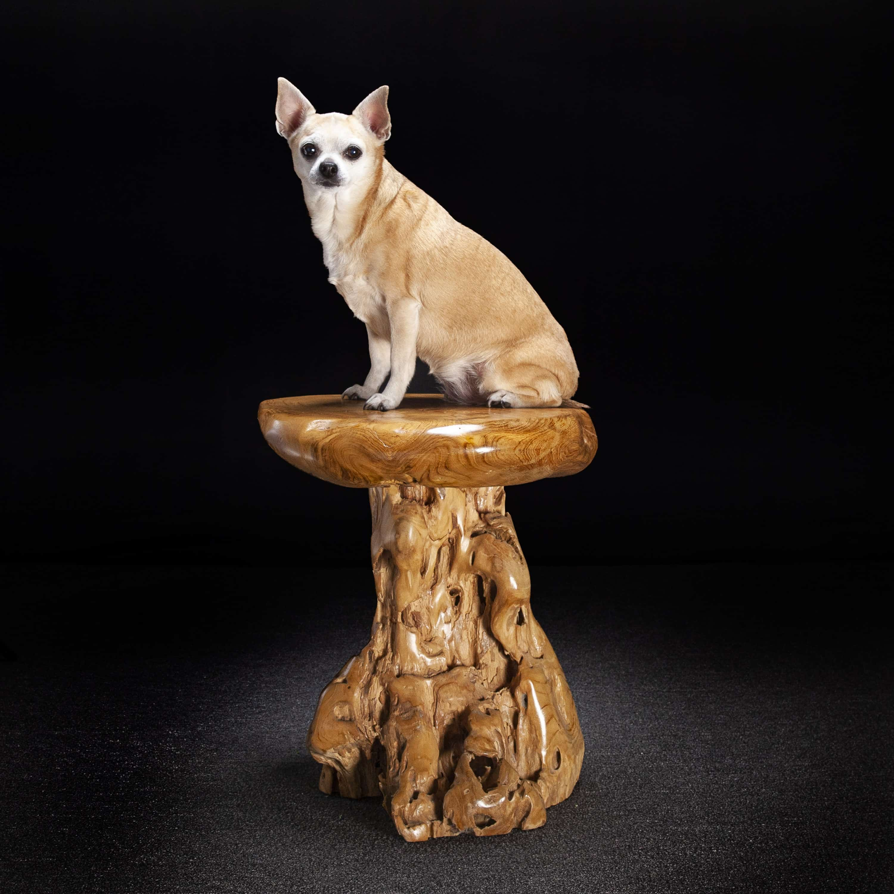 Teak Root Stool/Side Table